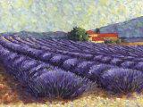 Lavender Fields II Print by Lorraine Westwood