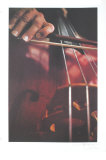 Cello Collectable Print by Harvey Edwards