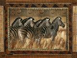 Cebras Posters por Rob Hefferan