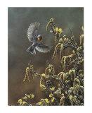 Paruline a Collier Print by Pierre Leduc