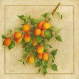 Abricots du Roussillon Prints by Vincent Perriol