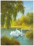 White Symphony I Posters by Brian Smyth