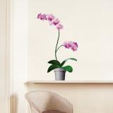 Orkidéer Väggdekal