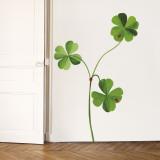 Four Leaf Clovers - Duvar Çıkartması