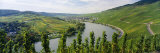 Vineyards Along Moselle River, Mosel-Saar-Ruwer, Germany Fotografisk trykk av Panoramic Images,