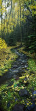 Stream Flowing Through Forest Fotografie-Druck von Panoramic Images 