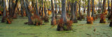 Bald Cypress Trees in a Forest, Illinois, USA Photographic Print by  Panoramic Images