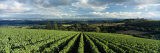 Clouds over Vineyards, Domaine Drouhin Oregon, Newberg, Willamette Valley, Oregon, USA Photographic Print by  Panoramic Images