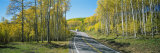 Recreational Vehicle Driving on Road Winding Through Aspen Forest Photographie par Panoramic Images