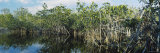 Panoramic Images - Reflection of Trees in Water, Hells Bay Trail, Everglades National Park, Florida, USA Fotografická reprodukce