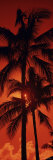 Palm Trees at Dusk, Kalapaki Beach, Kauai, Hawaii, USA Photographic Print by  Panoramic Images