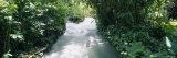 Blue Hole Gardens River, Tropical Foliage, Negril, Jamaica Photographic Print by  Panoramic Images