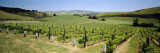 Omihi Hills Vineyard, Canterbury, New Zealand Photographic Print by  Panoramic Images