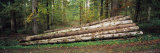 Stack of Logs in a Forest, Black Forest, Baden-Wurttemberg, Germany Photographic Print by  Panoramic Images