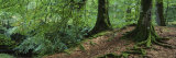 Trees in the Forest, Aberfeldy, Perthshire, Scotland Photographic Print by  Panoramic Images