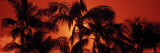 Palm Trees at Dusk, Kalapaki Beach, Kauai, Hawaii, USA Photographic Print by  Panoramic Images