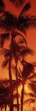 Palm Trees at Dusk, Kalapaki Beach, Kauai, Hawaii, USA Fotografisk trykk av Panoramic Images,