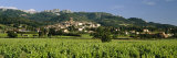 Vines in a Vineyard, Cotes du Rhone, Sablet, Vaucluse, Provence, France Photographic Print by  Panoramic Images