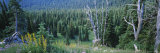 Trees in a Forest, Olympic National Park, Washington, USA Photographic Print by  Panoramic Images