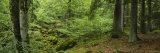 Moss Growing on Tree Trunks and Rocks in the Forest, Smaland, Sweden Photographic Print by  Panoramic Images