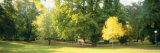 Trees in a Park, Wiesbaden, Rhine River, Germany Photographic Print by  Panoramic Images