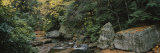 Trees in a Forest, Meadow Run, Ohiopyle State Park, Pennsylvania, USA Photographic Print by  Panoramic Images