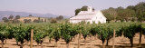 Barn in a Vineyard, Napa Valley, California, USA Photographie par Panoramic Images 