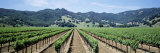 Rows of Vine in a Vineyard, Hopland, California, USA Photographic Print by  Panoramic Images