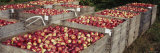 Heap of Apples in Wooden Crates, Grand Rapids, Kent County, Michigan, USA Photographie par Panoramic Images