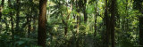 Trees in a Forest, Rainforest, Trianon Park, Sao Paulo, Brazil Fotografie-Druck von Panoramic Images