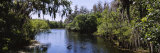 Hillsborough River in a Forest, Lettuce Lake Park, Tampa, Hillsborough County, Florida, USA Photographic Print by  Panoramic Images