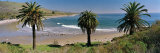 Palm Trees at Refugio State Beach, California, USA Photographic Print by  Panoramic Images