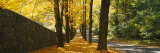 Path Covered with Leaves, Connecticut, New England, USA Photographic Print by  Panoramic Images