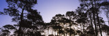 Trees in a Forest, Venice, Sarasota County, Florida, USA Photographic Print by  Panoramic Images