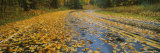Leaves Covered Road Passing Through a Forest, Near Traverse City, Michigan, USA Photographic Print by  Panoramic Images