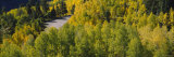Aspen Trees on Highway 145, Telluride, Colorado, USA Photographic Print by  Panoramic Images