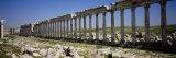 Old Ruins of Cardo Maximus, Apamea, Syria Fotografisk trykk av Panoramic Images,