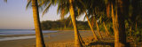 Palm Trees on the Beach, Samara Beach, Guanacaste Province, Costa Rica Photographic Print by  Panoramic Images