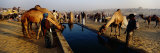 People at a Camel Fair, Pushkar, Rajasthan, India Photographic Print by  Panoramic Images