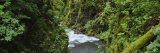 Sol Duc River, Olympic National Park, Washington, USA Photographic Print by  Panoramic Images