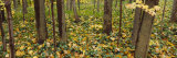 Fallen Leaves in a Forest, Eric County, New York, USA Photographic Print by  Panoramic Images