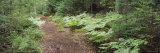 Trail in the Forest, Boreal Life Trail, Adirondack State Park, Adirondack Mountains, New York, USA Photographic Print by  Panoramic Images