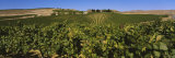 Vineyard on a Landscape, Yakima Valley Appellation, Washington, USA Photographic Print by  Panoramic Images