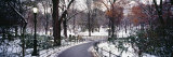 Walkway in a Park, Central Park, Manhattan, New York City, New York, USA Photographic Print by  Panoramic Images