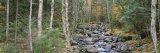 River Flowing Through a Forest, Adirondack Mountains, New York, USA Photographic Print by  Panoramic Images