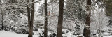 Trees Covered with Snow in a Forest, Ashland, Jackson County, Oregon, USA Photographic Print by  Panoramic Images