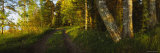 Dirt Road Along a Lake, Joutseno, Finland Photographic Print by Panoramic Images 