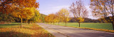 Treelined on Both Side of a Country Road, Baden-Wurttemberg, Germany Photographic Print by  Panoramic Images