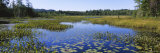 Marsh in a Forest, Heron Marsh, Adirondack State Park, Adirondack Mountains, New York, USA Photographic Print by  Panoramic Images
