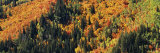 Trees in the Forest, Utah County, Utah, USA Photographic Print by  Panoramic Images